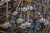 Eiskristalle (oonaolivia) Tags: eiskristalle icecrystal frozen icedwater gefroreneswasser türlersee nature winter schweiz switzerland