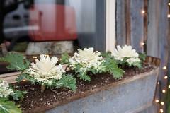 "9/365 fremont ""flowers"""