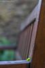 lo mas insignificante en ocasiones es lo mas hermoso (Moordenaar) Tags: ilce6000 a6000 sony sigma seda agua banco verde amarillo fuente contraste flor flores naturaleza oleiros coruña sol puerta cara face plantas arboles abandonado luz invierno ventana morado belleza beautiful hermoso foto diego campos ondas bokeh desenfoque piedra casa