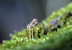 basking (Paul Wrights Reserved) Tags: fungus moss light exposure sunlight growth growing botanical bokeh focus outoffocus texture composition macro macrophotography leadinglines nature