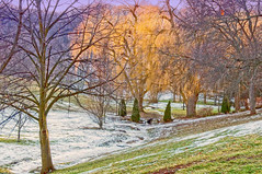 Willows in the Park (otterman51) Tags: canada grimsby landscape ontario ortbaldauf park tree cold colours conifer escarpment field nature niagara niagaraescarpment ortbaldaufcom outdoors photography snow sunlight sunset wildlife willow winter