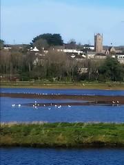 Phillack church (jackyjulyan) Tags: water estuary church hayle unitedkingdom england birds seagulls