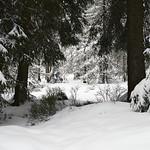 Harz-Oderbrueck_e-m10_1012053833 thumbnail