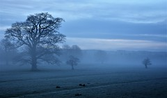Ghosts in the mist. (pstone646) Tags: trees landscape nature view mist sunrise sky dawn kent flora field clouds frost cold