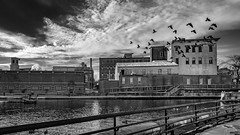 (Mr. Tailwagger) Tags: leica q summilux 28mm tailwagger ducks birds canal architecture clouds lowell ma