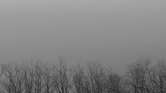 Vessels (52weeks2018#08 - Minimal) (ponzoñosa) Tags: bn blancoynegro blancetnoir blackandwhite brunches tree sky vessels veins minimal 52weeks 52