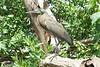 Exibido (dotcomdotbr) Tags: sony a77 colombia cartagena água oceanario acuario ave socó