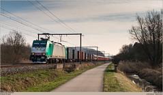 LINEAS 186 346-3 @ Zichem (Wouter De Haeck) Tags: belgië belgique belgien infrabel l35 hasselt leuven vlaamsbrabant zichem scherpenheuvelzichem lineas br186 bombardier traxx f140ms atc alphatrains cargo güterzug swr southwesttrains southwesternrailways class707 siemens desiro desirocity koppelwagon railadventure klinkum aachen aachenwest muizen muizengoederen dollandsmoor