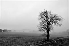Baum im Nebel (Uli He - Fotofee) Tags: ulrike ulrikehe uli ulihe ulrikehergert hergert nikon nikond90 fotofee wald januar winter winterbild 2018 nebelbäume nebelbaum wasser pfütze matsch