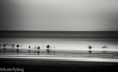 L o s t   in the   r u s h       #Love #Life #Moods #Moments #Beautiful #Nature #SunSandSea #Beach #BeachLife #SeaGulls #Agadir #Morocco #TravelDiaries #Thalassophile  #LongExposure #SeaScapePhotography #Mono #Monochromatic #BlackAndWhitePhotography #Butt (Sarwat Baig) Tags: nature beautiful life agadir mono thalassophile traveldiaries love seagulls blackandwhitephotography moments moods seascapephotography longexposure monochromatic morocco beachlife butterflybaigphotography beach sunsandsea