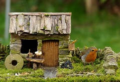 Robin with small cottage  (3) (Simon Dell Photography) Tags: robin bird garden small cottage old english country home view micro village house barn tiny modle model grind stone nature wildlife simon dell photography sheffield shirebrook valley s12 2018 spring image rambo yorkshire