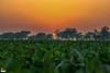 Sunset at Border (drift.pking) Tags: sunset photography automotive photographer colors border pakistan india