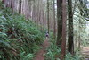 Up through a ferny forest we go (rozoneill) Tags: cape mountain berry creek siuslaw national forest hiking oregon florence princess tasha scurvy ridge trail nelson coastal
