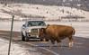 024A9200 (scepdoll) Tags: elkflatsturnout grandtetonnationalpark highway89 jackson jacksonhole moran rockymountains tetons wyoming bison bisoncrossing snow winter