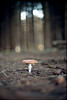a lone shroom (Boldizsár Nádi) Tags: filmphotography 35mmfilm photographersontumblr analogphotography originalphotographers analogcamera analog analogue filmisnotdead filmcamera filmgrain film negative negativephotography negativecamera celluloid vintage grain 50mm vignette dof smooth noise nature forest macro praktica bokeh takumar f14 mushroom shroom pines archive prakticallc agfa vista 200 m42 screw mount