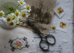 Contentment (Captured Heart) Tags: chamomile chamomileflowers stilllife happiness contentment thinkspring