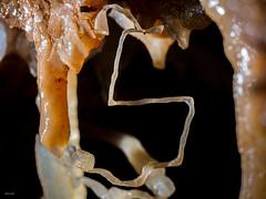 Le Cinq. Quand la gravité ne l'emporte plus - Aven Armédia (30) - France (Romain VENOT) Tags: armedia aven grottes cavités caves spéléologie caving concrétions excentriques calcite formation calcaire