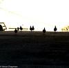 Roadblock (mandark_898) Tags: sunrise pigeon road orange shadow party gravel flock gang bunch birds