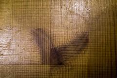Holz (blasjaz) Tags: blasjaz holz wood maserung holzmaserung doubleexposure double exposure mehrfachbelichtung incamera