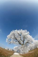 (Px4u by Team Cu29) Tags: winter baum landschaft frost kalt kälte rauhreif weg fischauge weitwinkel land