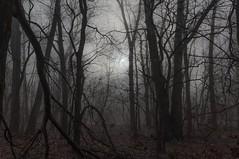 Sleepy Hollow (arthuroleary) Tags: woods trees treescape ohio walk trail fog midwest mood fz1000 lumixfz1000