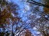 # 14 11 Berlin - Sans Soucis (76) (Wolfgang A Maringer) Tags: berlin wood wald himmel sans soucis