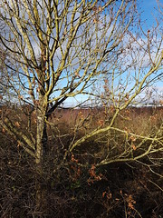 #Brandonmarsh #Wkwt stunning day. Coat free. Fighting the lurgy  with fresh air and nature. (jenny.marshall13) Tags: brandonmarsh wkwt