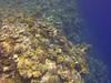 Reef (Peter_069) Tags: tauchen diving scuba malediven maldives äqypten egypt wasser water underwater unterwasser padi fische fisch fish shellfish muscheln moräne moränen moraine batfish fledermausfisch koralle korallen coral nemo clownfisch clownfish boot boat vessel blaueswasser bluewater