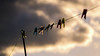 Reach For The Sky... (Philip R Jones) Tags: pegs clothesline dof cloud clouds cloudformation hope