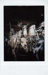 instant film (La fille renne) Tags: film instantfilm instax instaxmini lafillerenne lomoinstantautomatglass museum skeletons