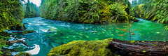"Bonsai ""Bend"" | February  2018 (pklopper) Tags: creek canada river canyon trees water nature haslam suspension bridge stream"