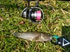 Snakehead gudgeon (zac08) Tags: smith daiwa steez hapyson