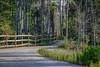 Winding Trail at Cypress Creek (tclaud2002) Tags: trail naturetrail winding windingtrail fence trees landscape nature mothernature cypresscreek naturalarea cypresscreeknaturalarea jupiter florida outdoors greatoutdoors usa