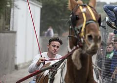 Ben Hur (Frank Fullard) Tags: frankfullard fullard benhur charioteer horse fair candid street portrait whip jockey rider galway colour color irish ireland heins hains equestrian sulki sulky