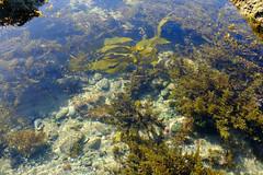 Snail shells (zassle) Tags: beach coastal landscape rockpools scenery camera:make=fujifilm geocountry geocity geostate exif:lens=xf18135mmf3556rlmoiswr exif:aperture=ƒ56 geolocation exif:model=xpro2 exif:make=fujifilm exif:isospeed=200 camera:model=xpro2 exif:focallength=216mm