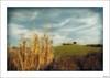 Salvar barreras y longitud de mirada (V- strom) Tags: paisajes landscape texturas textures nubes clouds cielo sky azul blue amarillo yelow verde green cañaveral reedbed matorral scrub nikon nikon2470 sonym5 vstrom luz light colina hill campo hierba countryside grass
