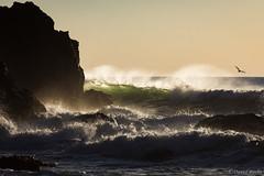 Roiling Sea (David Recht) Tags: graywhalecove wave breaker crashing ocean sea sunset backlit