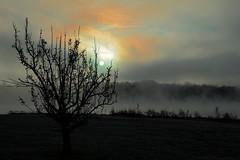 Dawn On A Foggy Morning (Jim DeFazio) Tags: lakenockamixon buckscounty pa pennsylvania dawn sunrise silhouette fog foggy misty sunup ghostly eerie spooky landscape scenic country rural black grey gray orange