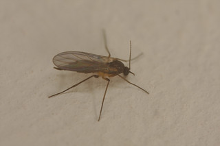 Fly IMG_0533
