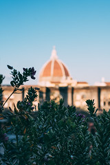No clouds (mougrapher) Tags: ifttt 500px sky city flower tower architecture building old town cielo florence dome firenze duomo column steeple bell fiori cupola exterior architettura flouwers colori famous place international landmark square piante