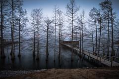 Winter morning on the lake (Mr. Greenjeans) Tags: lake lakebruin louisiana camp pier winter baretrees woods fishingcamp