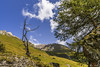 Old Tree (BIngo Schwanitz) Tags: 2017 bingoschwanitz bingos d500 ingoschwanitz nationalpark nationalparkhohetauern nikkor nikon nikonafs16801284eed nikond500 osttirol outdoor prägraten virgen virgental österreich