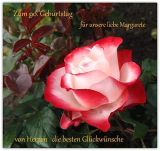 Rose für Margarete