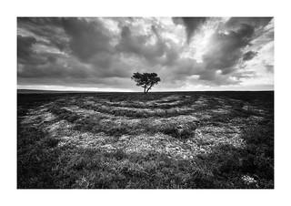 Egton tree