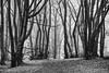 Road Closed (cotswoldman) Tags: witcombewood wood woods forest trees tree monochrome mono blancoynegro blackandwhite blancetnoir noiretblanc schwarzundweiss pattern gloucestercameraclub gloucestershire winter