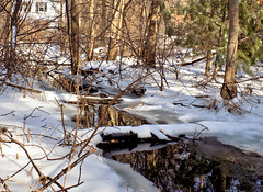 February - Winter Photo 3 (Stans Gallery) Tags: reflection mirror winter snow trees tree stream brook creek february water log shadows winterbeauty