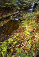 Blow Gill in late summer (Paul D Hunter) Tags: blowgill waterfall ryedale northyorkshire stream beck ll