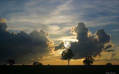Natureza mostrando seus encantos. Goiânia, Brasil.  Nature showing its charms. Goiania-GO, Brazil. (Opimentas) Tags: natureza nature landscape goiânia gyn paisagem sol sun sunsete entardecer evening arvores sky goiás go brasil brazil bhto wikimedia wikimédia wikipedia wikipédia flickr nuvens clouds