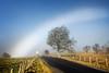 (Half a!) Fogbow (Stoates-Findhorn) Tags: 2018 scotland sutherland mist fog fogbow colaboll tree lochshin unitedkingdom gb
