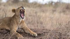 Nairobi-Nationalpark-9771 (ovg2012) Tags: kenia kenya nairobi nairobinationalpark